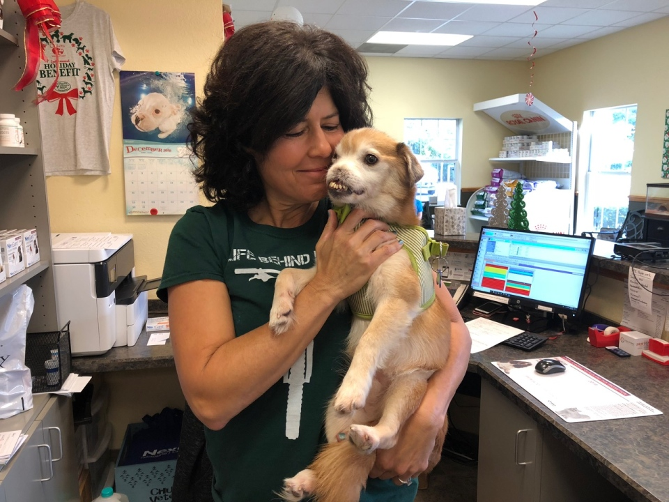 Sniffles is seen with Poodle and Pooch Rescue's medical director Michele Wacker at a veterinary clinic in Florida prior to dental surgery on Dec. 27, 2018. (Rebecca Lynch/Poodle and Pooch Rescue)