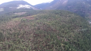 An entire hillside near Parksville lies flattened by surging winds. This is an image which seems to sum up the power of the Dec. 20 storm. BC Hydro crews boarded a helicopter to assess damage in the Whiskey Creek region. They found entire swaths of forest crushed by winds estimated at over 100 kilometres per hour.