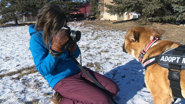 alberta woman using love of photography to help adoptable dogs lifestyle from ctv news