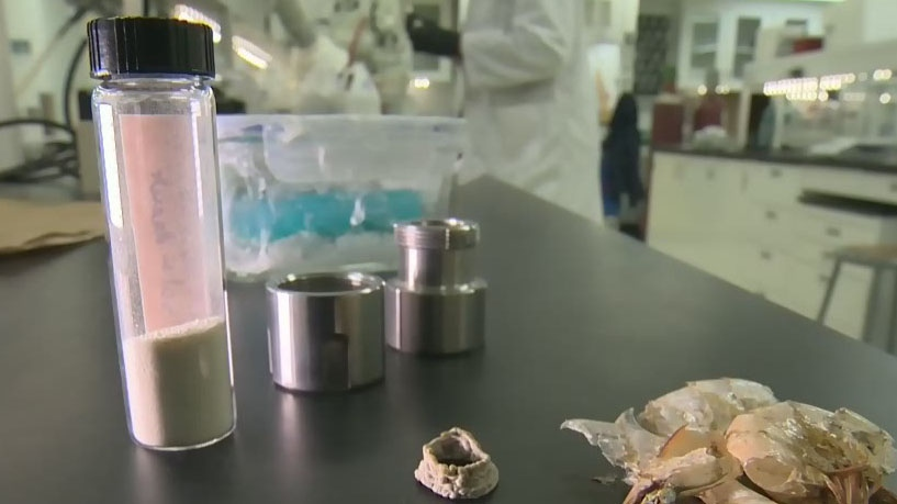 Researchers at McGill University have developed a new type of durable yet biodegradable plastic from the shells of crustaceans. (CTV Montreal)