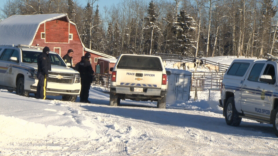The Alberta Society of Prevention for Cruelty to Animals said it was asked to help RCMP remove an unknown number of animals from a property near Evansburg, Alta., which was the focus of an animal-cruelty investigation.