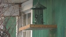 Bird feeders banned in Banff