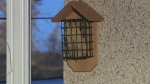 Banff wants to ban bird feeders