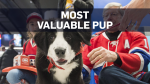 Meet Flambo, the newest Montreal Canadien