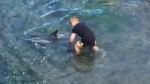 Quick-thinking men save stranded dolphins