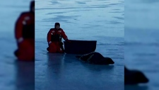 Glace Bay residents rescue stranded seal