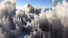 Ice coats everything along the shore of Lake Huron in Huron County, Ont. on Monday, Jan. 14, 2019. (Scott Miller / CTV London)