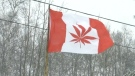 The grey area of retail cannabis in Ontario