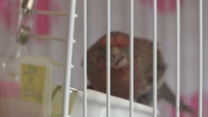 Improper feeder care could harm bird
