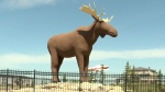 Mac the Moose is seen in Moose Jaw, Sask.