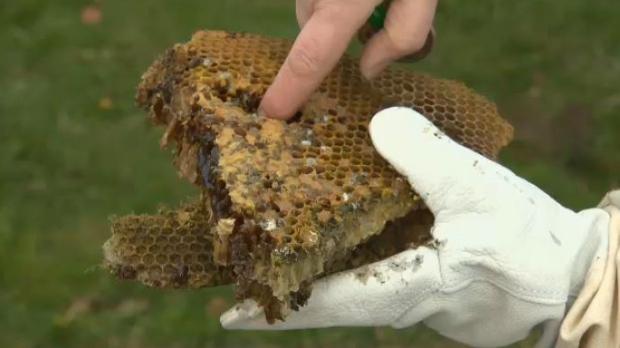 bees bc hydro pole