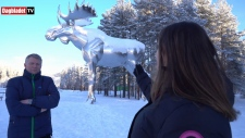 World's tallest moose in Norway?