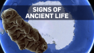 Signs of life found buried in Antarctica