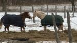 Prize Ponies