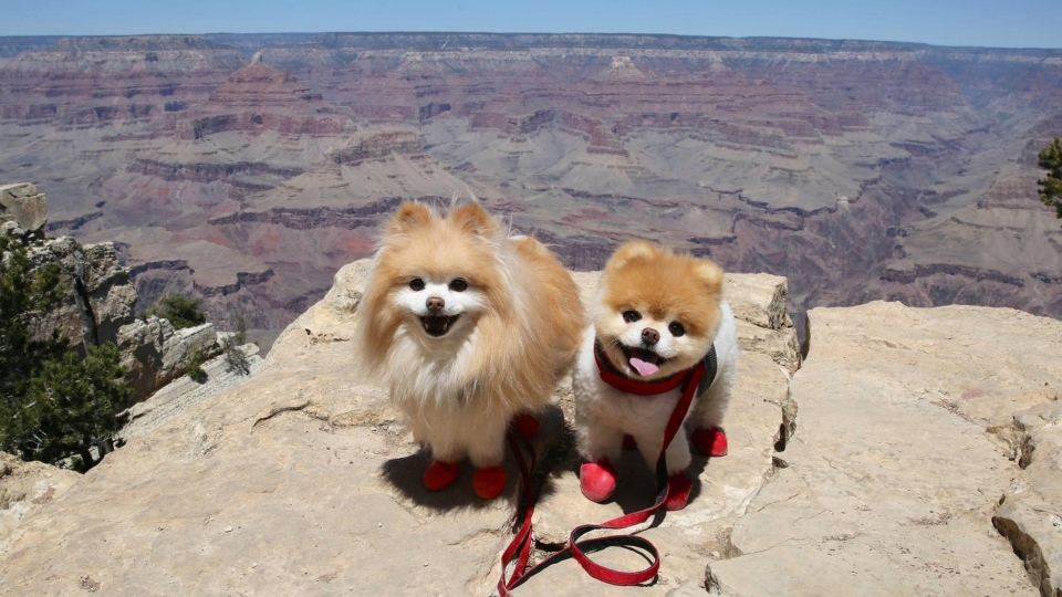 Boo the Pomeranian, right, with his best dog pal Buddy. (Facebook)