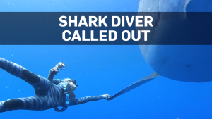 Biologists call out diver for touching shark