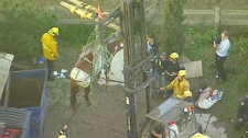 Horse rescued from dumpster