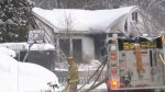 Four dogs killed in Nepean blaze