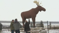 Moose Jaw making changes to Moose statue