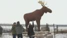 Moose Jaw making changes to Moose statue
