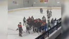 Police were called after a report of an assault at a hockey game in Mill Woods. (MIKA MORIN)