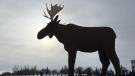 Mac the Moose (Cole Davenport / CTV Regina)