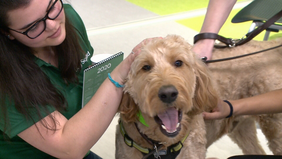 Algonquin students find stress relief with dogs.