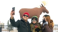 Mac the Moose to get new antlers