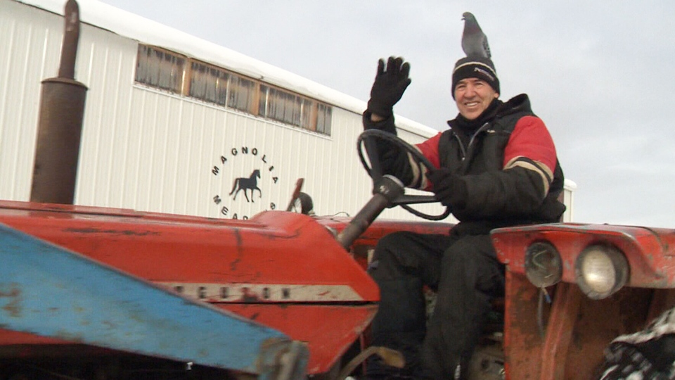 This pigeon seems to have taken a shine to Greg Germscheid, a rancher from the Entwistle, Alta., area.