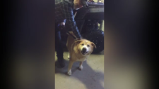 Photo of Ont. guard dog outside in the cold sparks