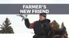 Alberta farmer's unusual new farm hand