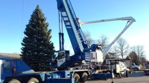 File image of a Litz Crane & Rigging crane being used to move a tree in 2015.