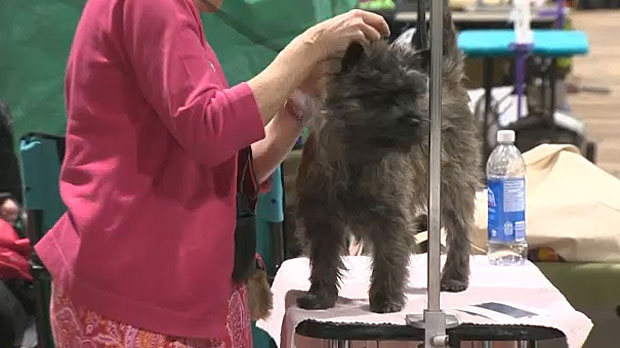 2019 Winter Classic Dog Show On At Spruce Meadows Ctv News