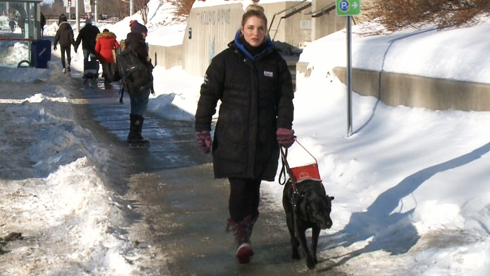 Shelby Travers walks with her guide dog Frances in Ottawa.