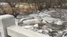 Ice along Schneider Creek in Kitchener