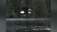 eagle theft fishing line