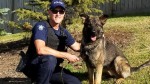 Hammer the RCMP dog is seen in this handout photo from February 2019. (Comox Valley RCMP)