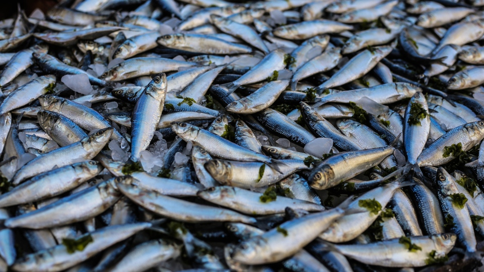 The conservationist group Oceana said that Canada has a widespread fraudulent fish problem, and that enforcing strict traceability laws is needed.(Oziel Gomez / Pexels)