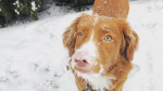 Check out these viewer-submitted images of pets and people making the most of the snowy weather blanketing much of B.C.'s South Coast this week. (From Cassidy Verhulst in Langley)