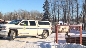Dozens of animals were removed from an Alberta acreage where three dead horses were found.