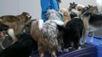 Cold weather boon for dog daycare