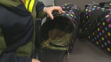 In this week's pet care segment, CTV Northern Ontario's Rebecca Nobrega talks to a veterinarian about what to do when travelling with a pet.