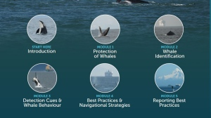 A screen from the 'Whales in our Waters' tutorial is shown. (BC Ferries)