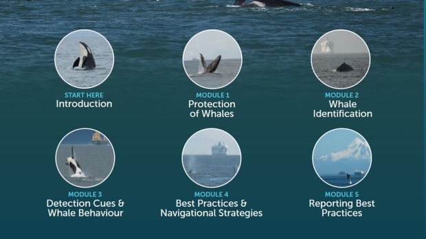 New online tutorial aimed at helping mariners protect B.C. whales