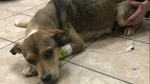 CTV Atlantic: Animal cruelty witness speaks out