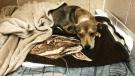 Mounties investigate animal cruelty