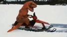 Woman takes unique snowmobile ride