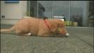Sawatsy Sign-off- Puppy Pupil