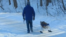 An Ont. paralyzed dog is getting the chance to enjoy playing outside using specialized leg attachments to ski around on the snow. (eddiessecondchance)