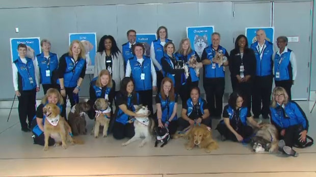 Dogs from St. John Ambulance brought smiles to passengers at Pearson International Airport on Feb. 20, 2019.